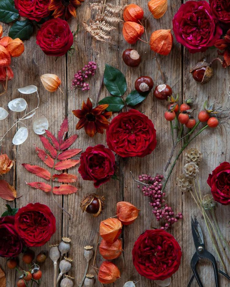 Tess Red Roses Flatlay Design
