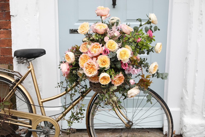 Bicycle Basket Full of David Austin Roses