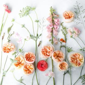 Juliet peach Roses Flatlay Design