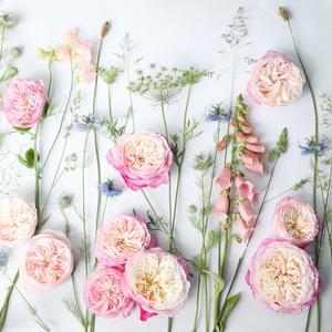Constance Pink David Austin Roses Flatlay