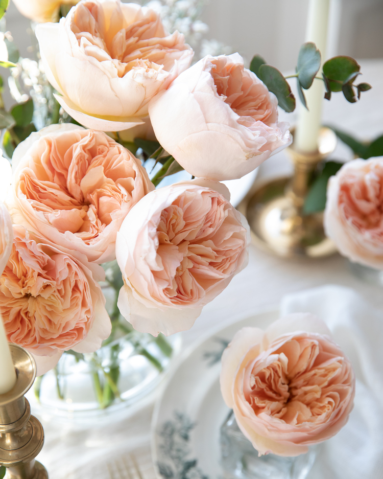 Juliet Peach Roses for Valentines Day