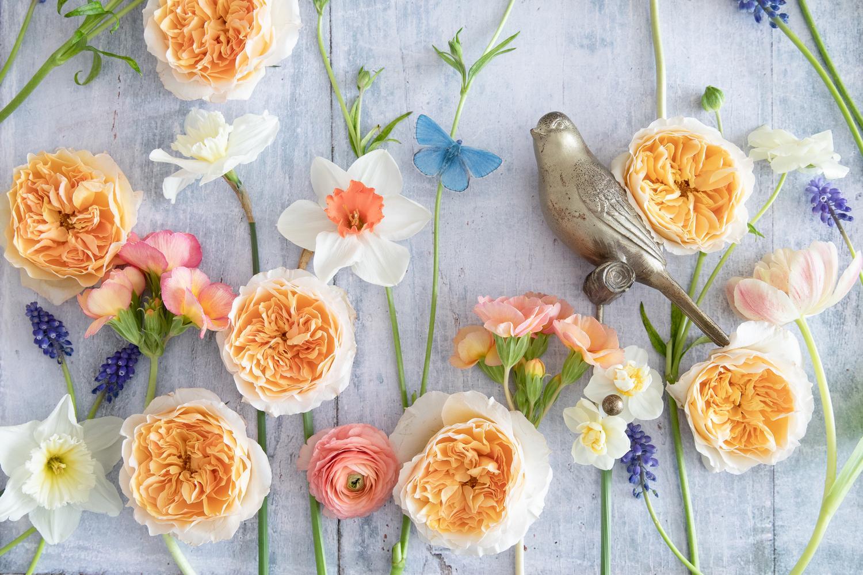 Beatrice roses by David Austin