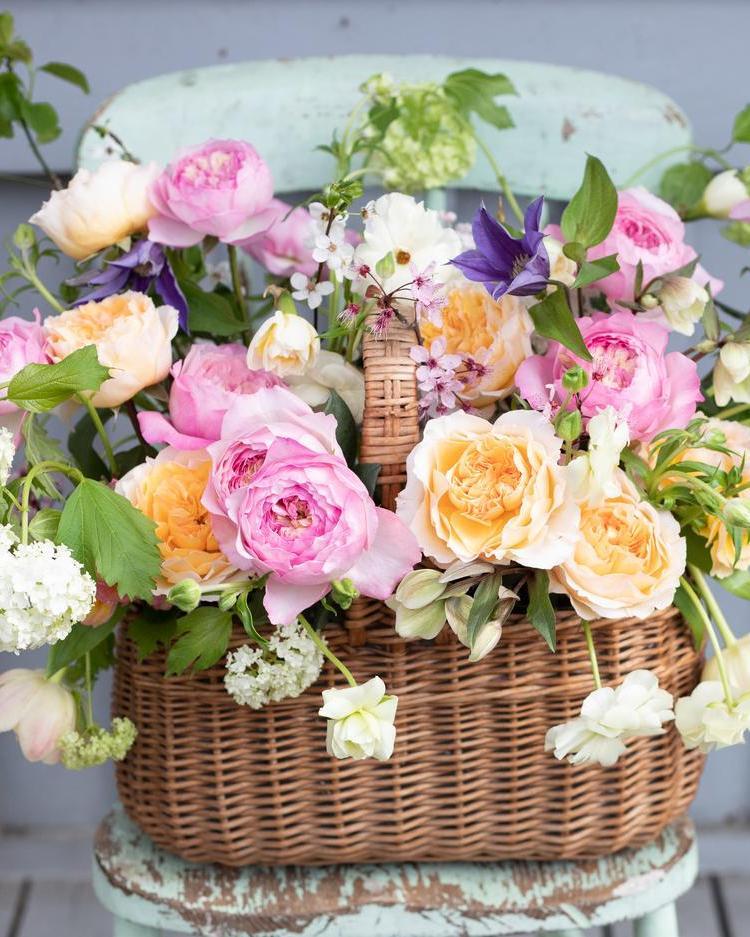 Spring basket of David Austin Roses