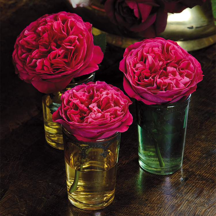 Kate Rose David Austin Single Roses in Bud Vases