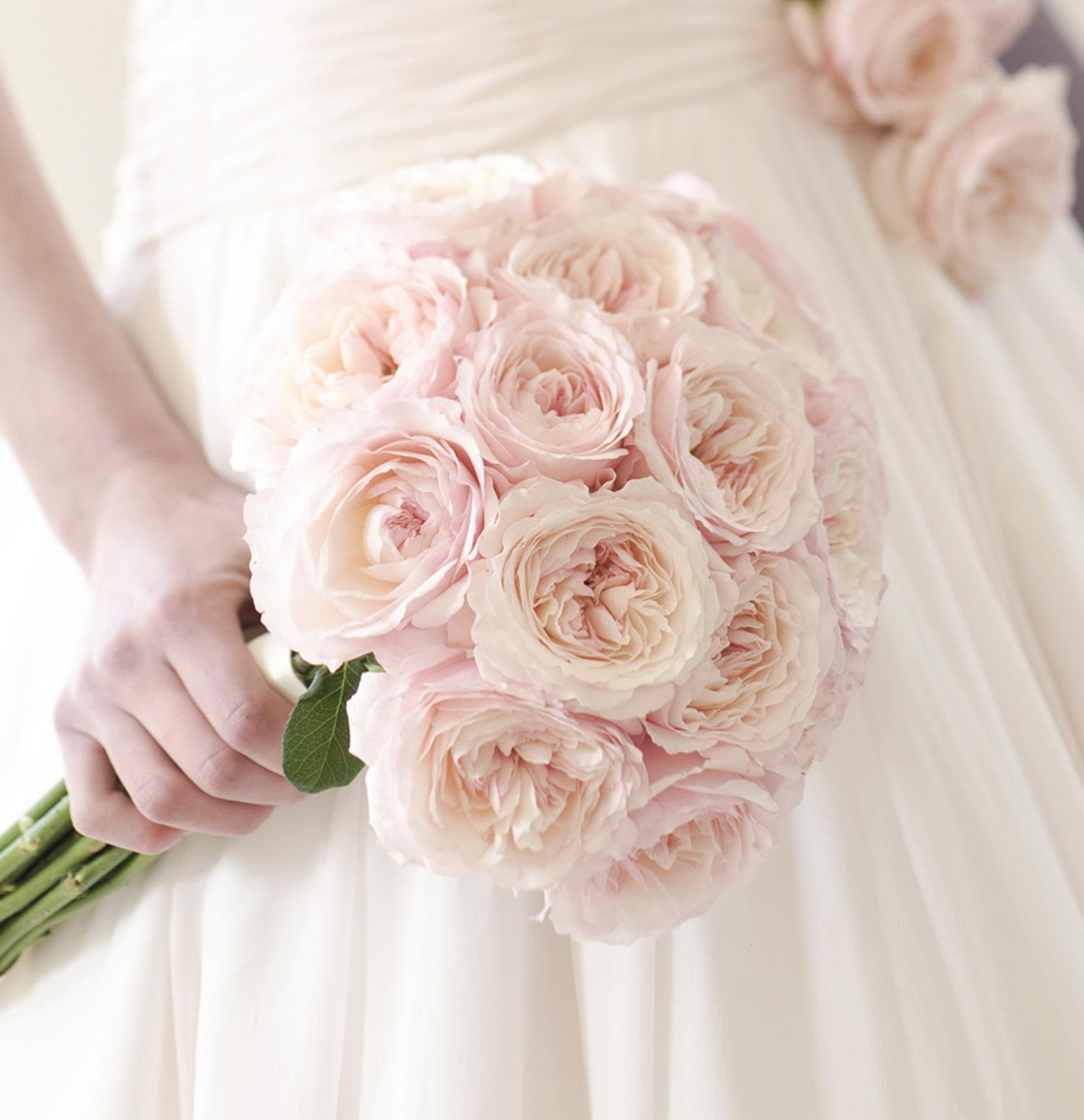 Keira Rose David Austin in Long Stemmed Bouquet