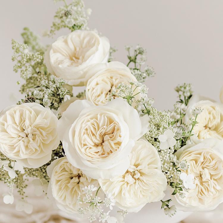 Leonora rose close up bloom