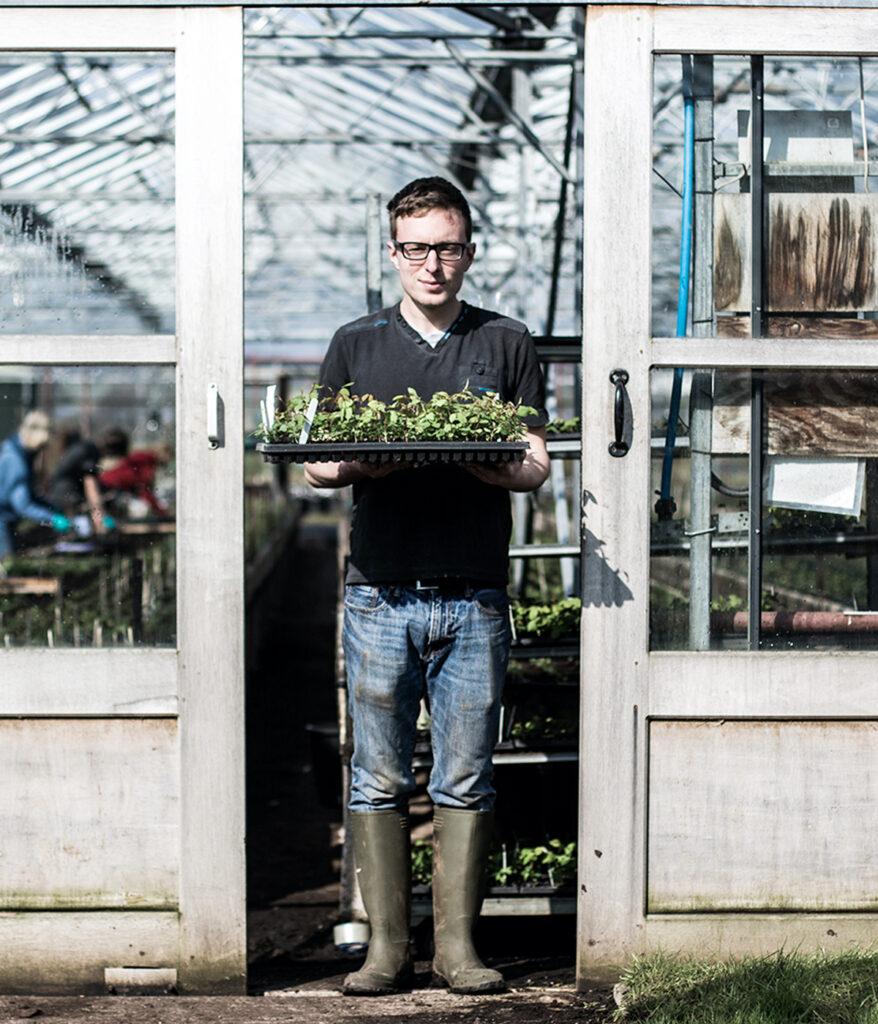 Jardinier de David Austin marchant de serre chaude