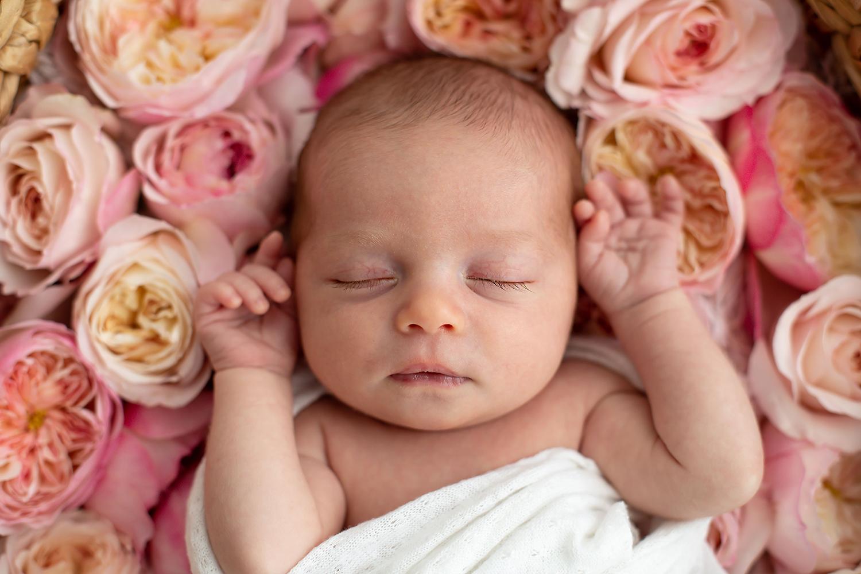 デビッドオースティンローズと赤ちゃんの写真撮影
