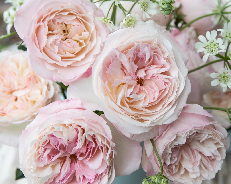 Keira Wedding Roses David Austin Cut Roses